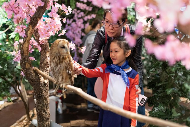 Celebrate Cherry Blossom Season