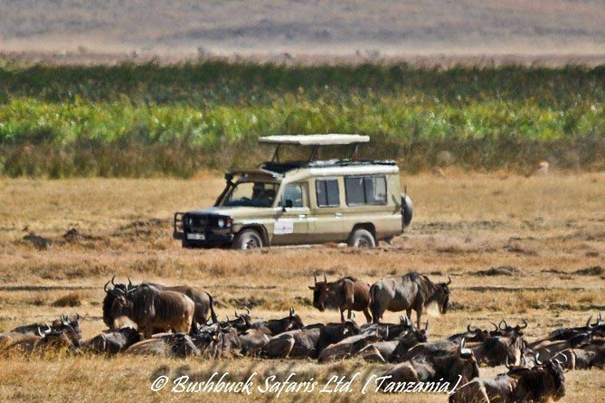 3 days 2 nights Mid Range Safari