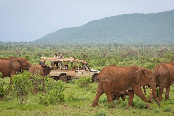 4-Day Nairobi & Samburu National Reserve Safari
