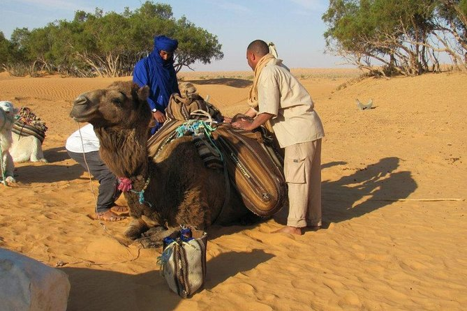 Camel ride and 1 night in the desert photo 4
