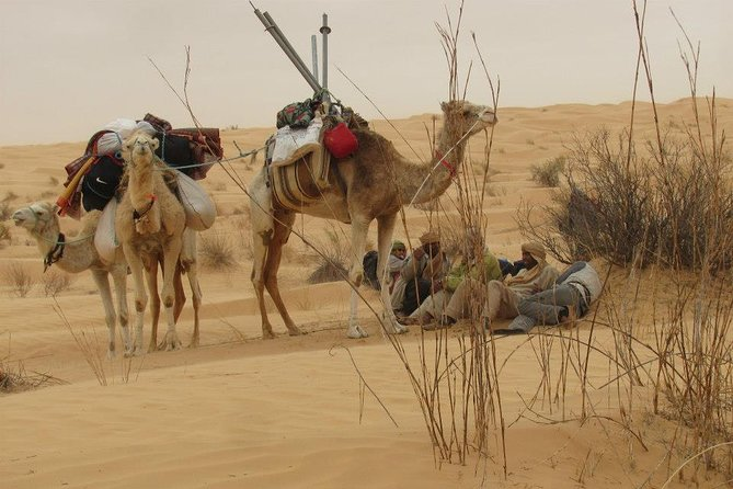 Camel ride and 1 night in the desert photo 3