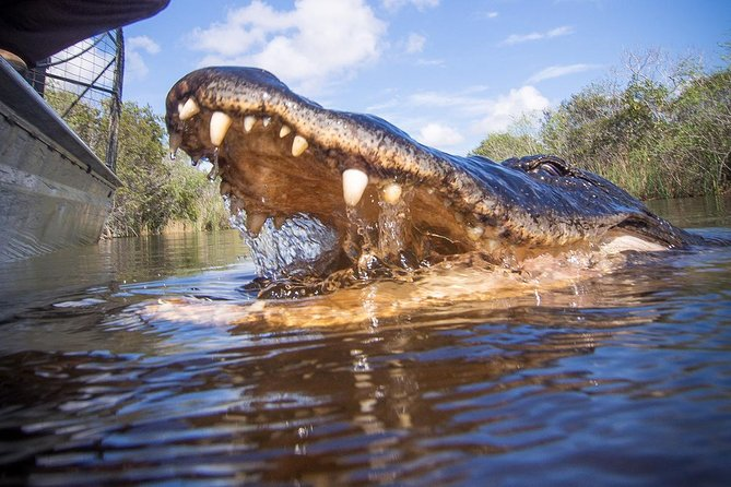 Private Everglades tour with Airboat and Wildlife Show