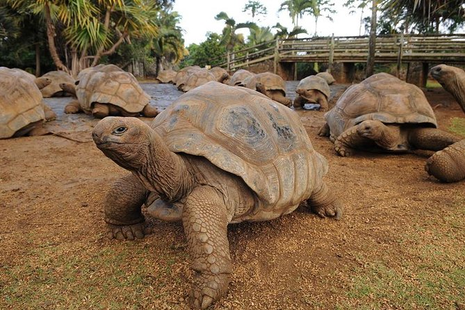 Southern Tales Tour: Full day tour incl Crocodile Park & Seven Colored Earth