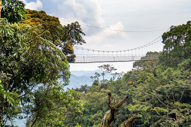 3-Day Nyungwe Forest Chimpanzee Tour