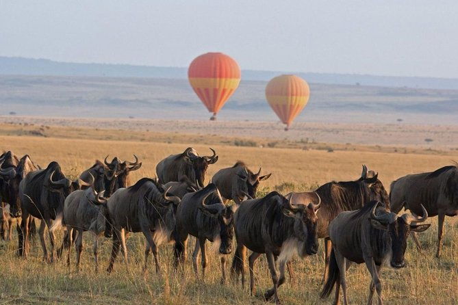 5 Nights - 6 Days Manyara, Serengeti, Ngorongoro