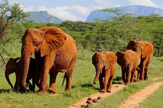 Amboseli National Park Guided Full Day Tour photo 15