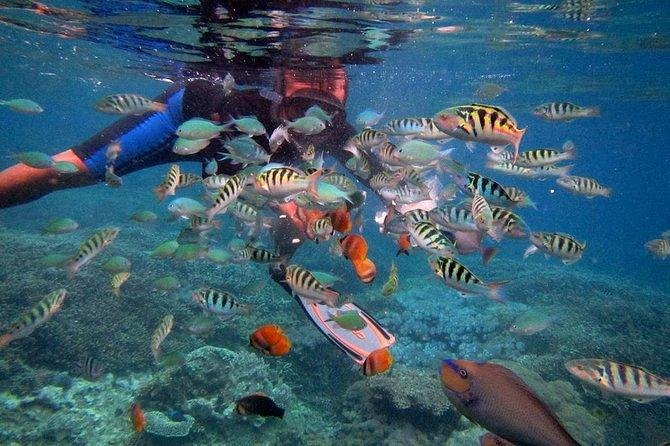 THE AMAZING SNORKELING AND TOUR AT NUSA PENIDA ISLAND