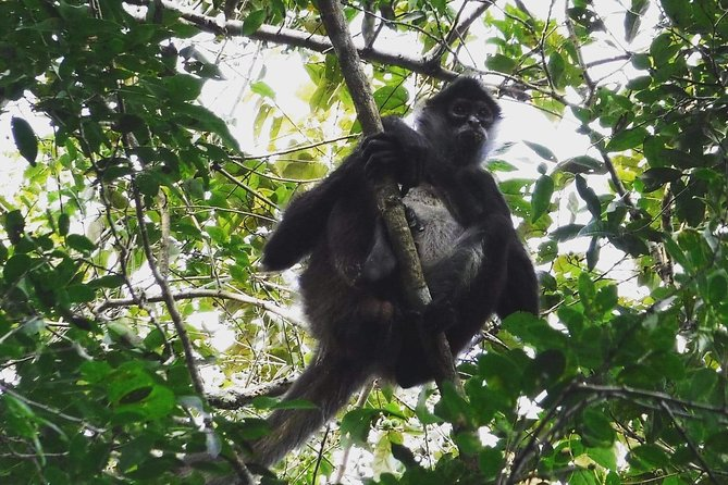 Wild Monkey Adventure (Full Day)