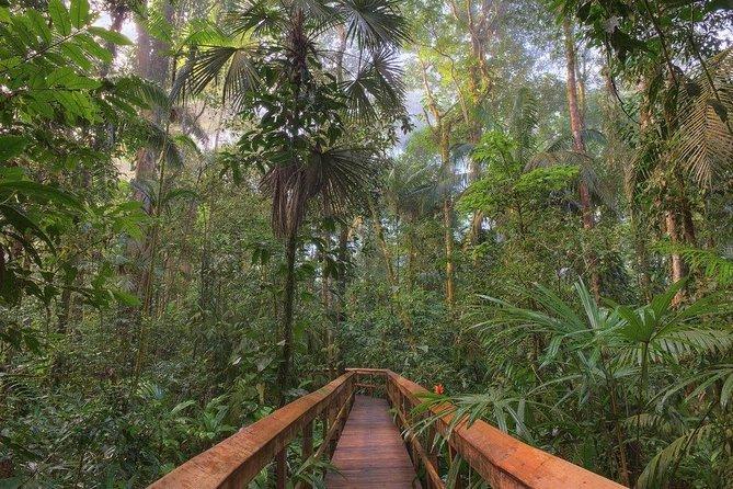 Cinco Ceibas Ecological Reserve from San José