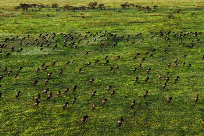 6 Days Tarangire Serengeti Ngorongoro Lake Manyara..