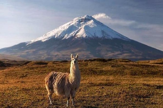 Cotopaxi National Park Tour: Hiking and Downhill Bike All Inclusive