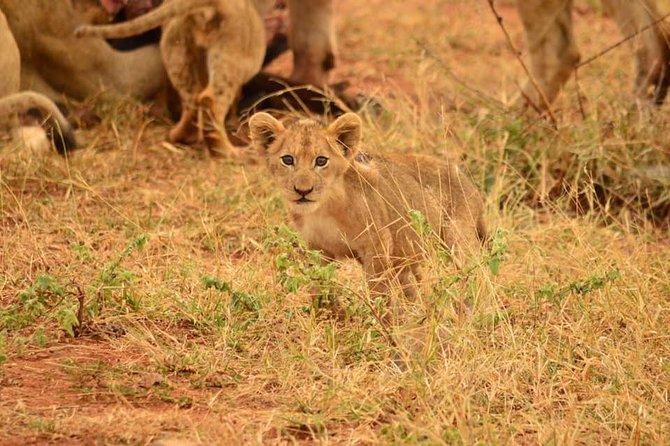 Baby lion found close to Pilanesberg centre
