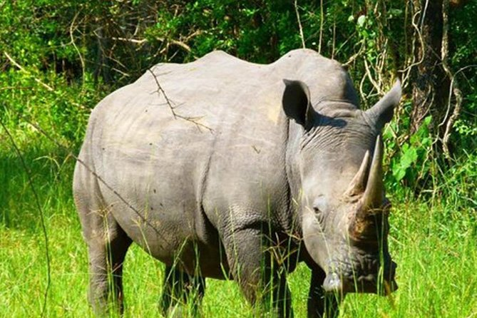 3-Day Rhino Tracking with Big 5 Safari