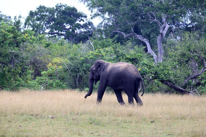Full day safari in Kumana National Park