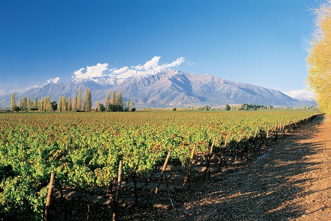 Private Andes Day Trip Maipo Valley with Concha Y Toro Wine Tour photo 1