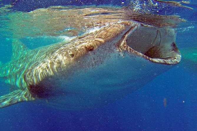 Whale Shark Life Experience from Cancun and Riviera Maya (lunch included) photo 1