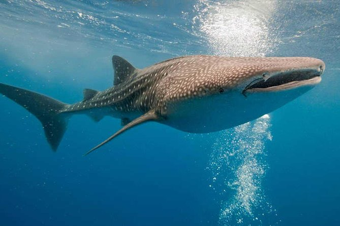 Whale Shark Life Experience from Cancun and Riviera Maya (lunch included) photo 10