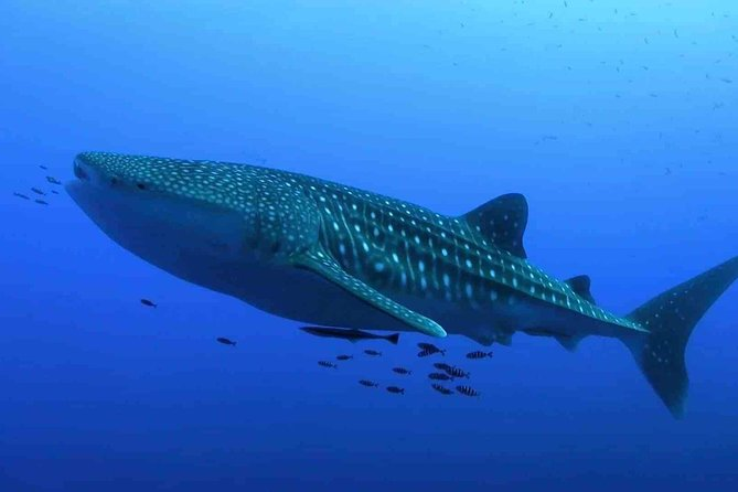 Whale Shark Life Experience from Cancun and Riviera Maya (lunch included) photo 4