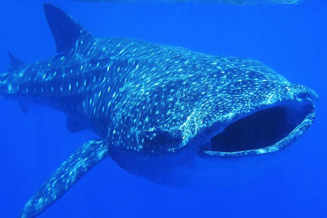 Whale Shark Life Experience from Cancun and Riviera Maya (lunch included) photo 13
