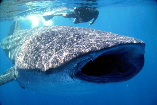 Whale Shark Life Experience from Cancun and Riviera Maya (lunch included) photo 2