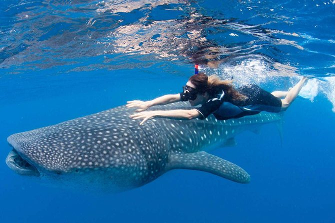 Whale Shark Life Experience from Cancun and Riviera Maya (lunch included) photo 7