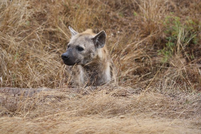Kruger National Park Full Day Game Drive photo 6