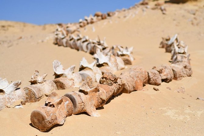 Private Full Day Trip to the Valley of the Whales & Fayoum Oasis photo 16