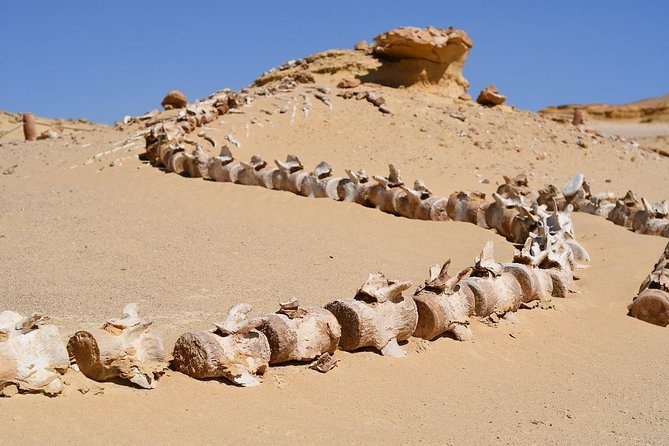 Private Full Day Trip to the Valley of the Whales & Fayoum Oasis photo 20