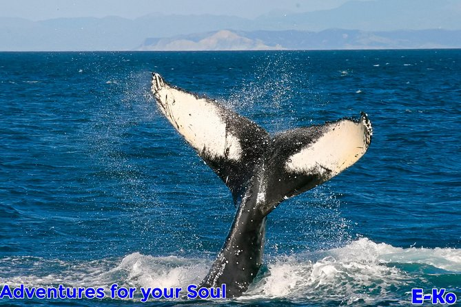 Whale Watching ,History and Wildlife Cruise