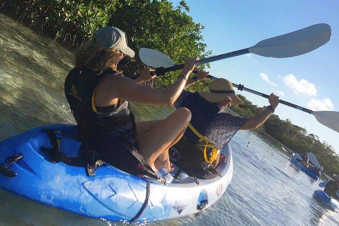 Mangroves Kayak Tour