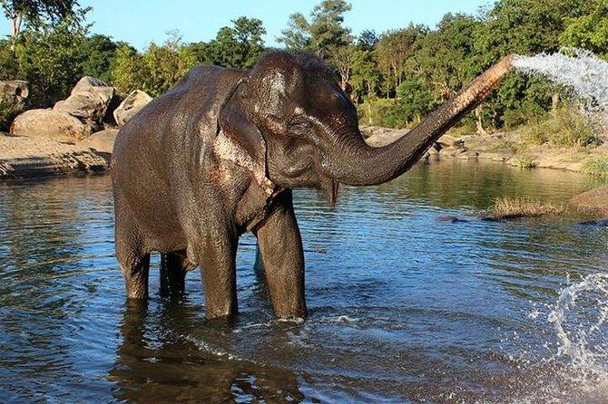 Same day tour to Tajmahal with SOS wildlife Elephant & Bear Sanctuary