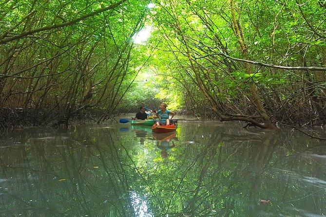 Khao Lak Mangrove Explorers