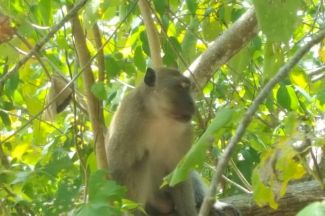 No monkey business, just untouched wildlife.