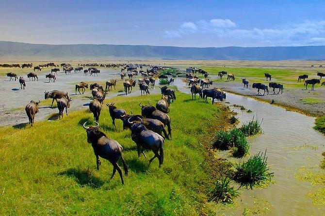Day Trip Ngorongoro Conservation Area