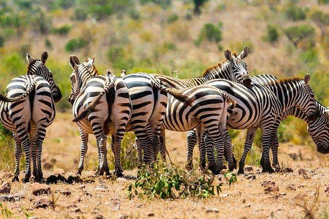 4-Day Zebra Kenya Safari