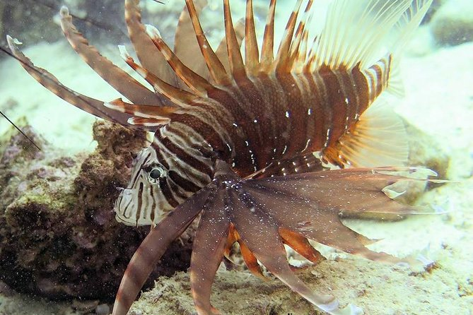 Dive trip with 2 dives to Koh Rang National Park or Koh Mak (start from Koh Mak)