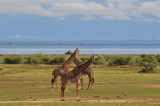 2 Days Northern Circuit Safari (lake Manyara & Ngorongoro) photo 8