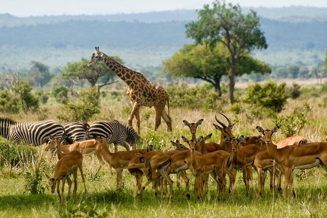 Private 14days Best of Kenya Romantic Honeymoon Safari Holiday