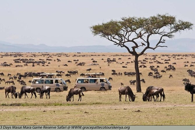Private 4 Days Best of Masai Mara Wildlife Lodge Safari