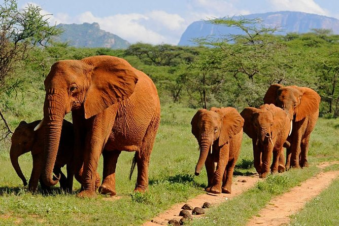 5-Day Affordable Wildlife Private Safari in Kenya