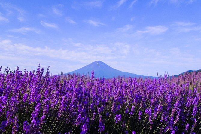 Mt. Fuji 5th Station, Lake Kawaguchi & Seasonal Fruits Picking from Tokyo photo 11