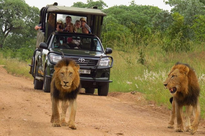 Vehicle & Guide Hire! Private Full-Day Safari in the Kruger National Park