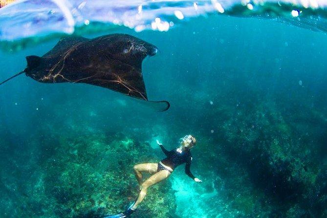 Nusa Penida Snorkeling & Kelingking Tour