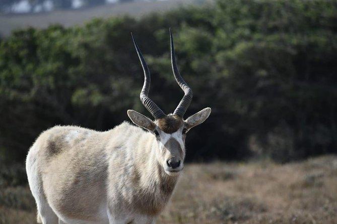 National Park Visit Souss Massa (Endangered Animals)