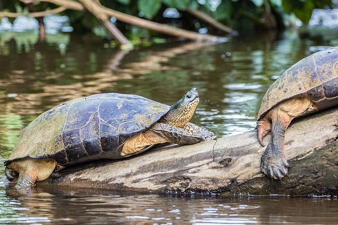 All-Day Expedition to Tortuguero National Park from San José