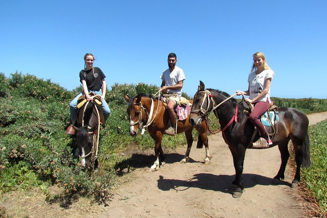 Viña del Mar and Valparaiso Private Tour Including Horseriding photo 8