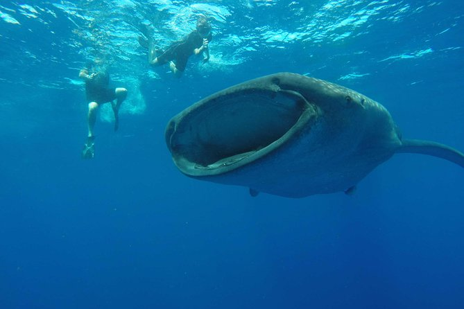 Whale Shark Adventure Unique Life Experience in Cancun with Lunch and beverages