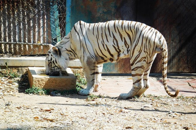 Day Trip to Bannerghatta National Park with White Tiger Safari & Butterfly Park