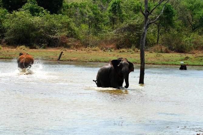 Day Trip to Galle Fort & Udawalawa Elephant Sanctuary 5 Hours Extended Safari