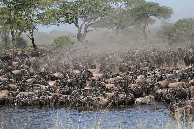 Tanzania Wildebeest Migration Safari - 7 Days